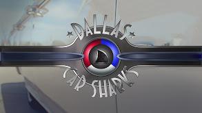 Dallas Car Sharks thumbnail