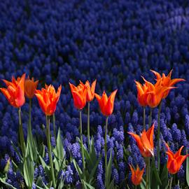 by Turgay Koca - Uncategorized All Uncategorized ( bed, gift, love, beauty, color, greeting, happy, bright, flora, april, vivid, spring, petal, bloom, composition, romantic, design, florist, season )