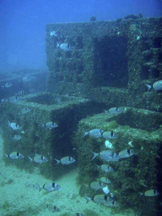 Plantean crear un parque submarino de arrecifes artificiales en Aguadulce