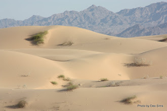 Photo: (Year 3) Day 37 - Sand Dunes With the Chocolate Mountains in the Background #2