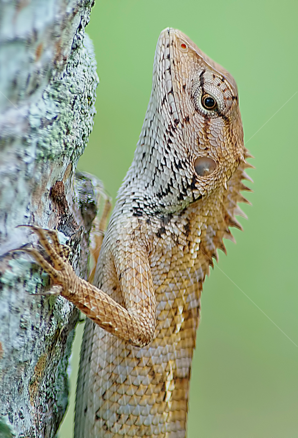 by SweeMing YOUNG - Animals Reptiles