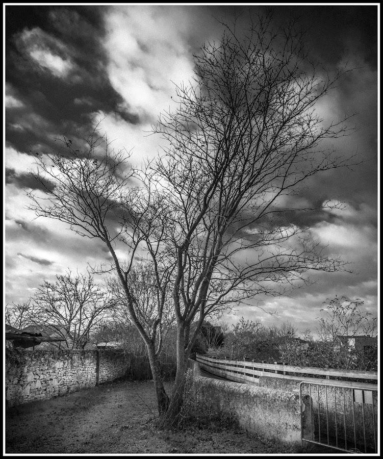 The Tree by David Tavan - City,  Street & Park  City Parks ( tavan, david tavan, d600, nikkor af-s 24-85 mm f/3, buxerolles, arbre, tree, nature, autumn, automne, nikon d600, david, nikon )