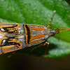 Long-Horned Moth