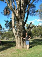 Photo: The proud owner of a big Eastern Redcedar (Juniperus virginiana).
