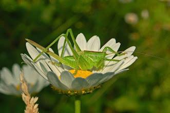 Photo: Grasshopper's Hammock