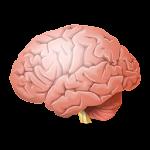 IQ Test and Puzzle Logic Icon