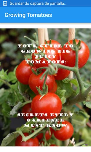 玩免費遊戲APP|下載Growing Tomatoes app不用錢|硬是要APP