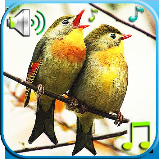Birds Sounds & Ringtones