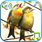 Birds Sounds & Ringtones