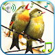 Birds Sounds & Ringtones (app)