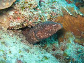 Photo: 2. Tauchgang am 2 mile Reef