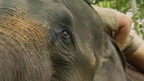 A Handful of Elephants thumbnail