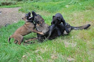 Photo: Kahn, Vilma og storebror Orkan