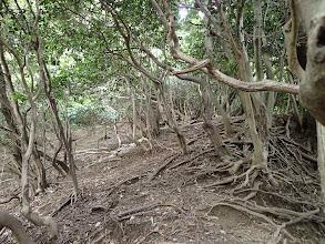 左の灌木帯へ