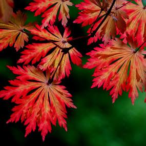 by Graham Sivills FBCS - Nature Up Close Leaves & Grasses (  )