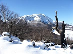 Photo: Pollino invernale