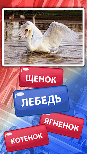 Russian Vocabulary Test u2013 Learn Russian Words  screenshots EasyGameCheats.pro 5