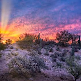 Desert Dawn by Charlie Alolkoy - Landscapes Sunsets & Sunrises ( desert, arizona, tucson, rays )