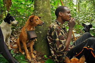 Photo: monkey-tail snack and envious dogs