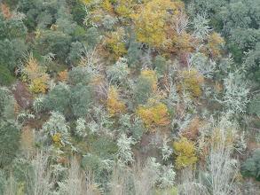 Photo: la vegetación ha cambiado