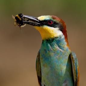 by Zoltán Túri - Animals Birds
