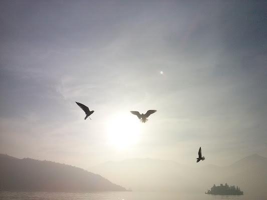 Liberi nel sole di Nicca