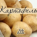 Картофель - кулинария, рецепты icon