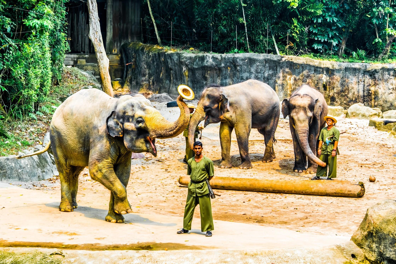 Singapore Zoo Elephant2