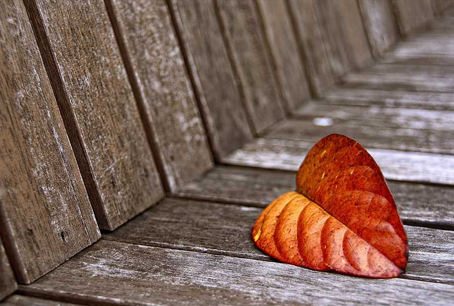 Autumn Leaf by Allan Opguar - Abstract Fine Art ( autumn, allan opguar, santol, allan, leaf, philippines, angeles city )