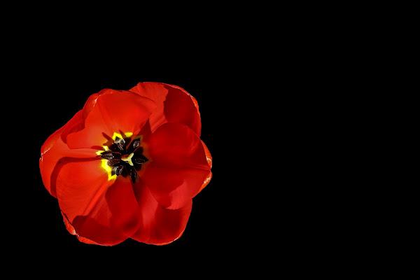 il fiore rosso di massimo bertozzi