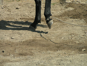 Photo: Try to give or relase just before the horse prepares to yield.
