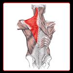Anatomi Kas Sistemi Icon