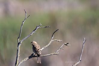 Photo: Finch