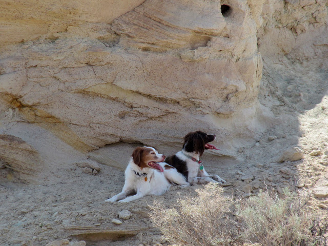Torrey and Boulder lying in the shade