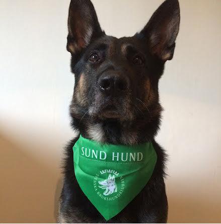 Scaf grön Sund med Hund (5 st scarf och diplom/förp)