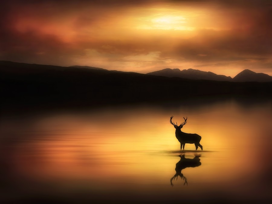The Stag in the Golden Sunrise by Jennifer Woodward - Digital Art Places