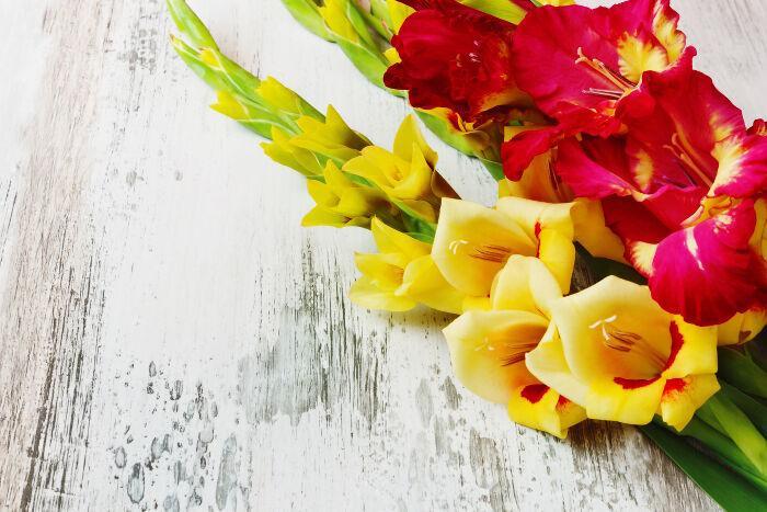 Description: ý nghĩa và biểu tượng hoa lay ơn
