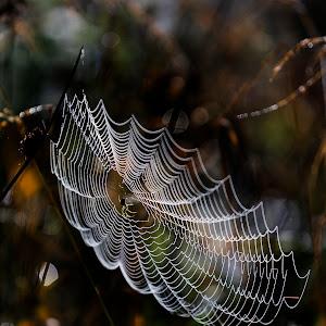 Spider and Webb.jpg