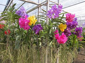 Photo: Orchid nursery