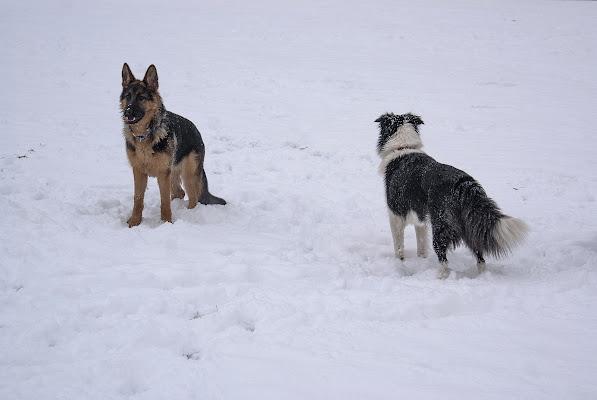 Approccio sulla neve di Amadeus
