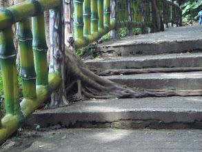 Photo: 步道3
