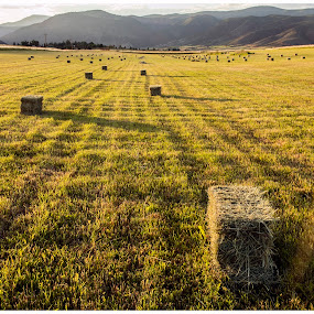 August Hay Bales by George Kremer - Landscapes Prairies, Meadows & Fields ( ranch, grass, hay bales, rocky mountains, colorado, sun, rural, country, aspen, mountains, pasture, sunset, hay, meadow, aspen colorado )