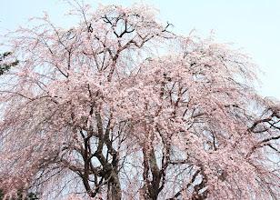 Photo: 平井