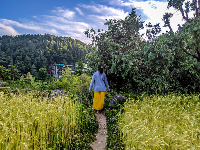 feature image of article on life in bhagsunag where a girl is walking in barley fields