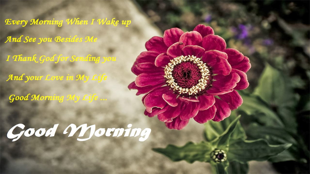 Download Good Morning Image Apk Latest Version App For Android Devices