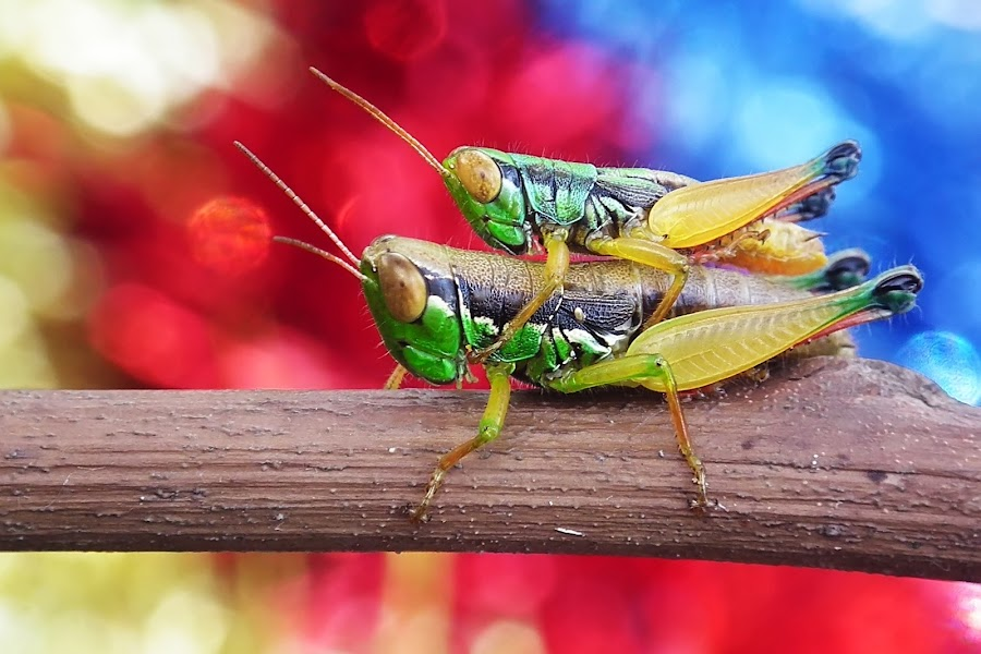 Tak Gendong by Bram Yuli - Animals Insects & Spiders