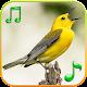 Birds Sounds Ringtones (app)