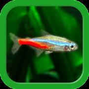 Mini Aqua: Tropical Fish Tank