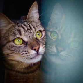 luna by Almasa Dalan - Animals - Cats Portraits