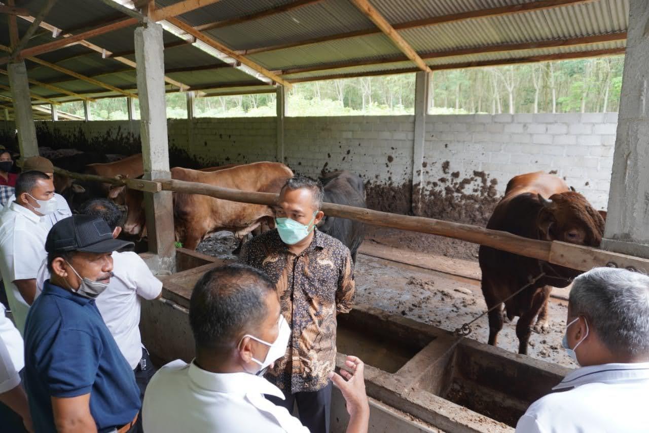 Kunjungan Kerja Pemerintah Daerah Kabupaten Sarolangun Terkait Pengolahan Hijauan Pakan Ternak